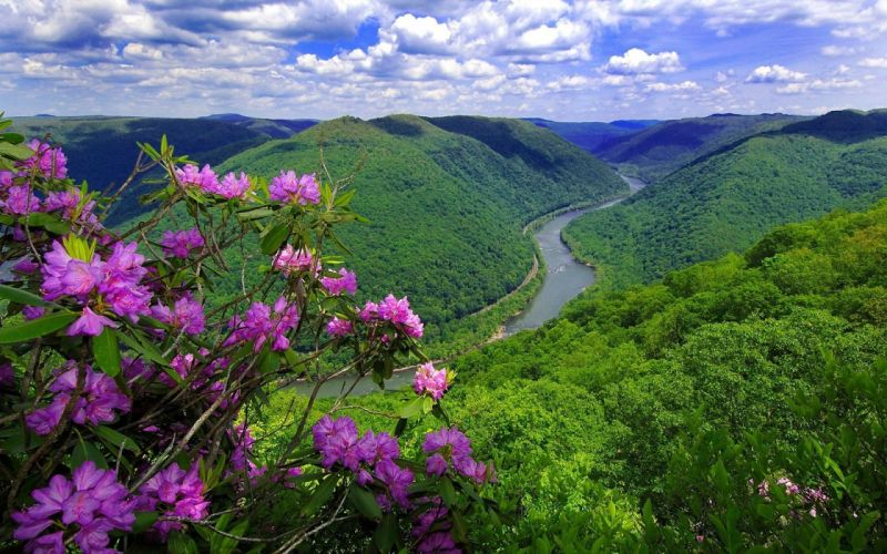 nature flowers river mountain wallpaper