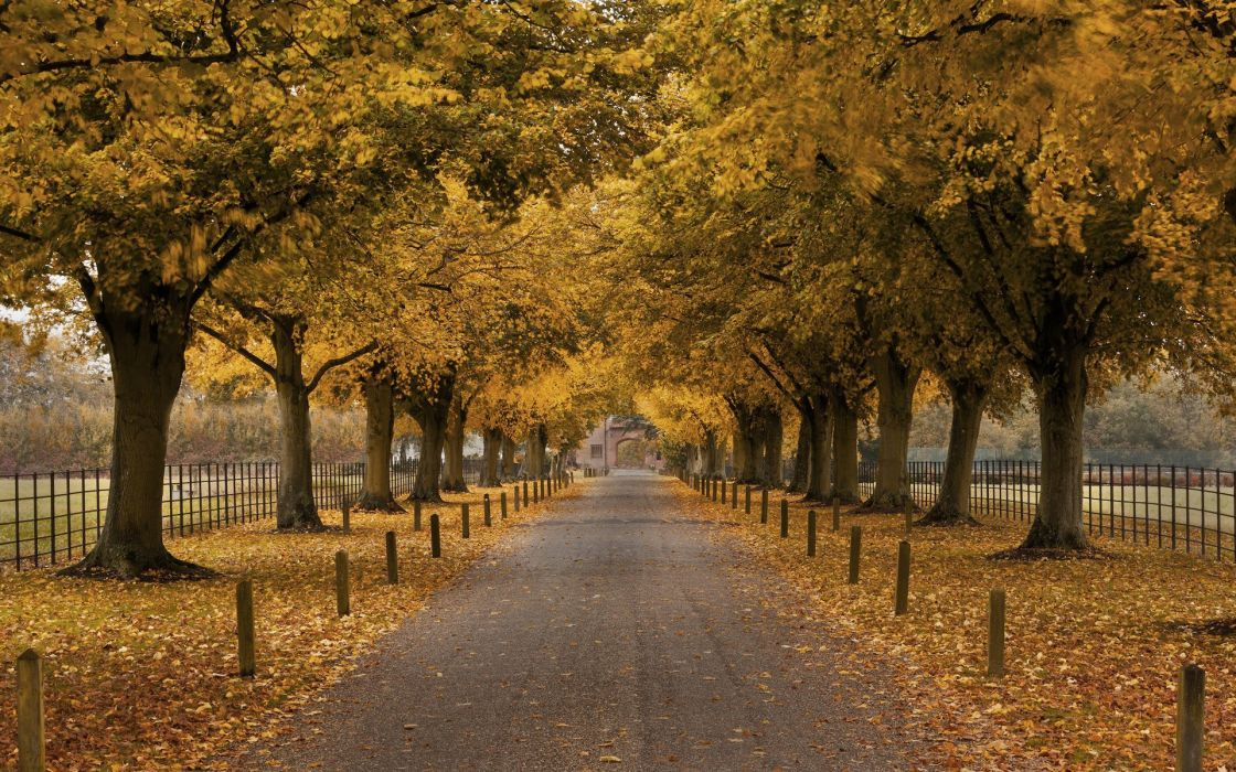 arch trees autumn fence building walkway wallpaper