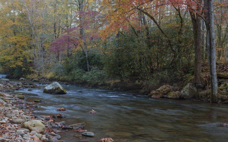 forest autumn river rocks wallpaper