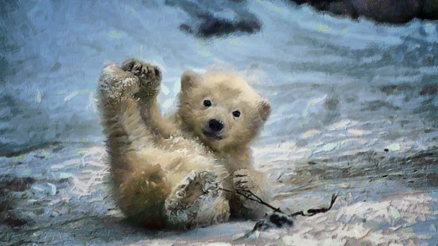 cachorro oso pardo wallpaper