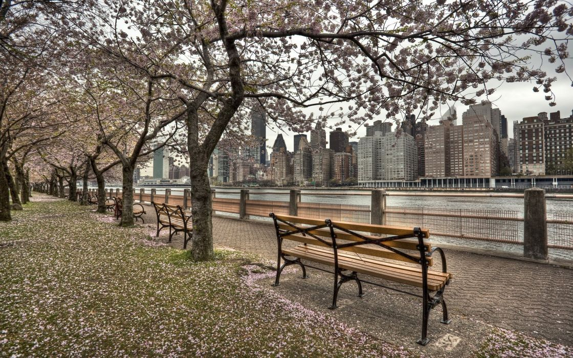 river gums beach waterfront us roosevelt island city ny new york wallpaper