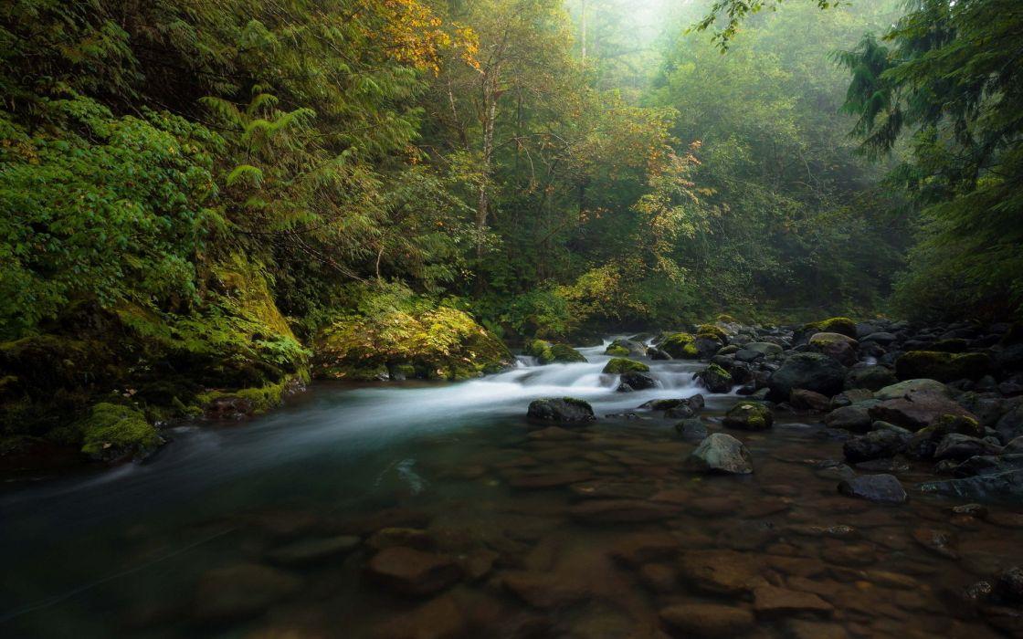wood stones river autumn fog wallpaper