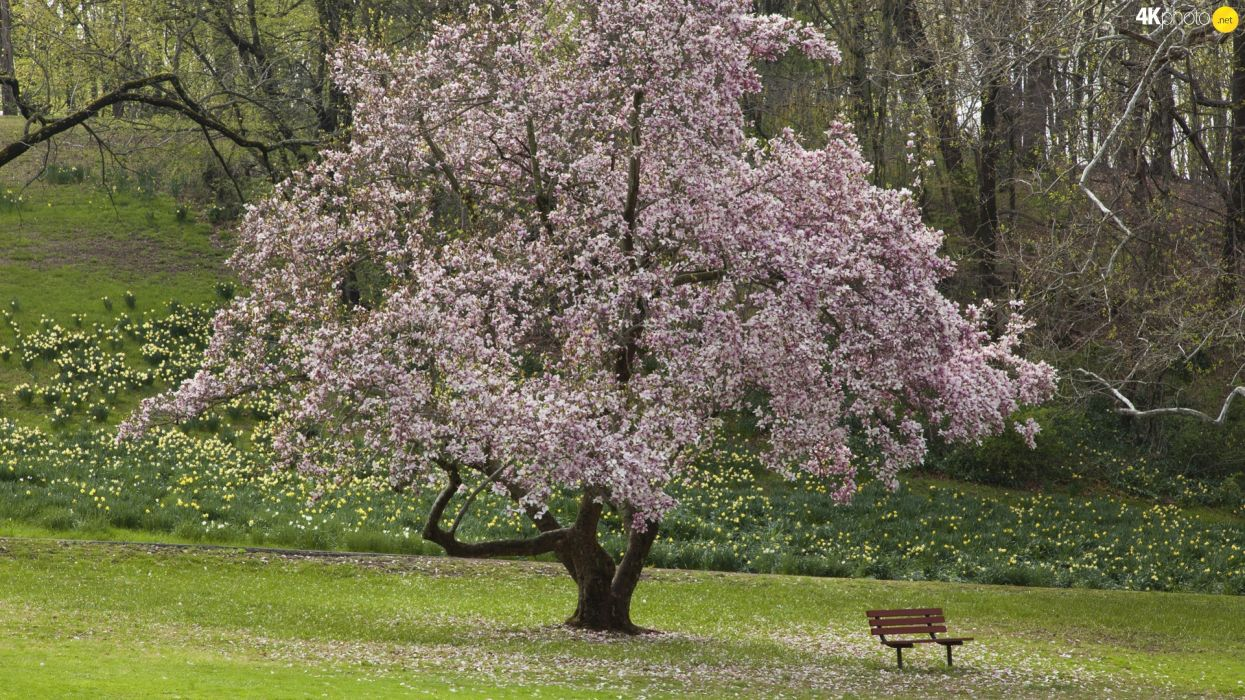 Bench forest Spring trees flourishing Flowers wallpaper