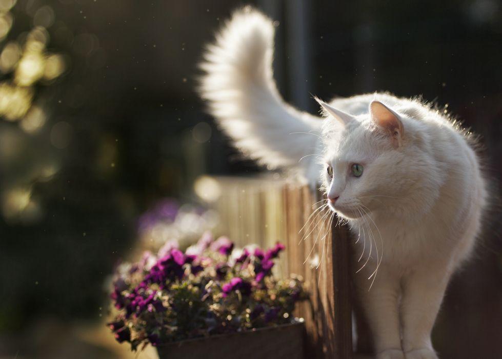 gato blanco jardin animales felino wallpaper