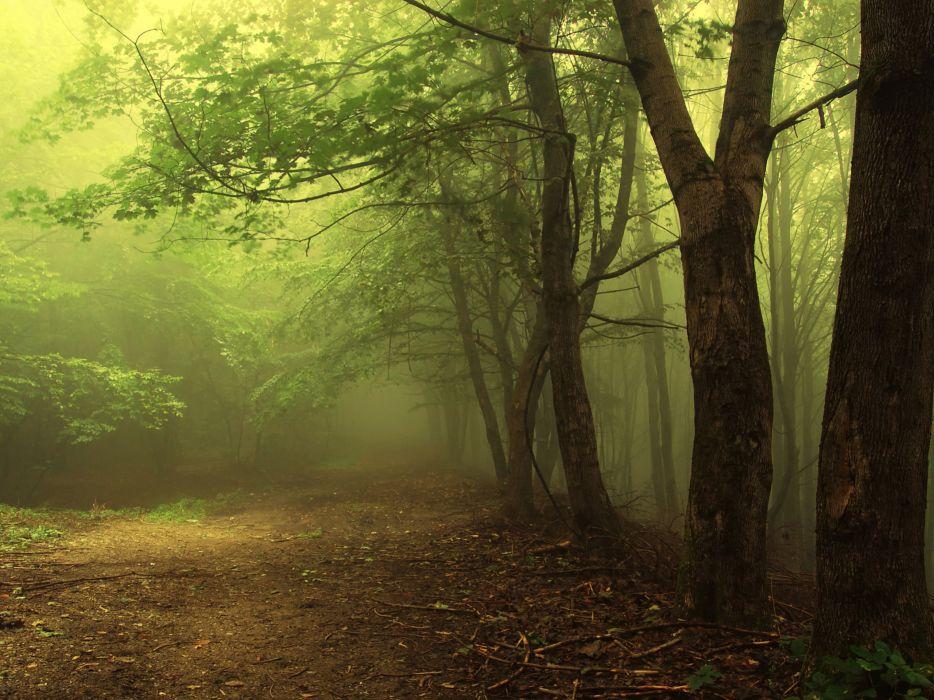 landscape tree forest fog beauty wallpaper