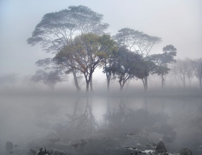 landscape tree forest fog beauty nature wallpaper
