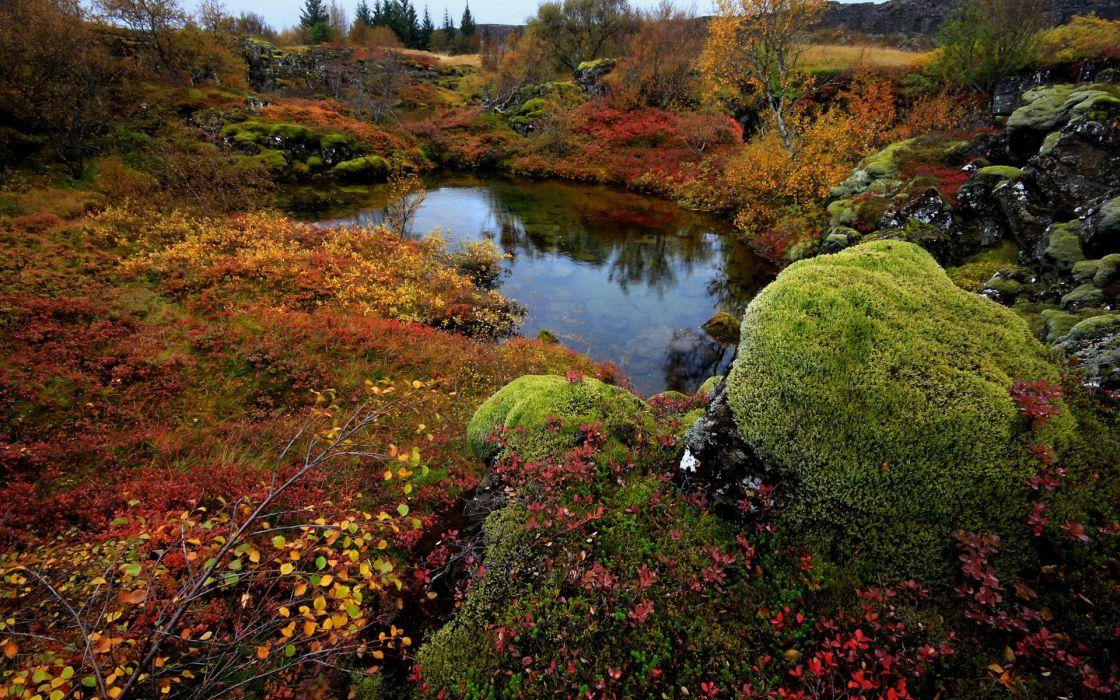 lake moss stones Iceland trees national park thingvellir wallpaper