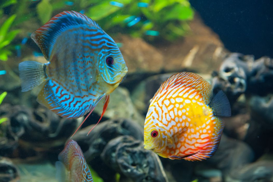 peces colores arrecife wallpaper