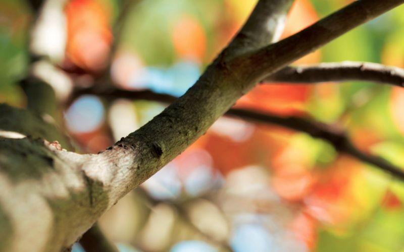 macro macro background wood tree bokeh branch blur wallpaper
