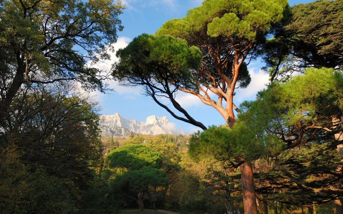 Mishor Park Mountains Crimea nature trees ukraine wallpaper