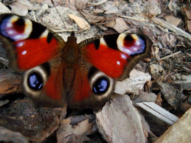 mariposa colores insecto wallpaper