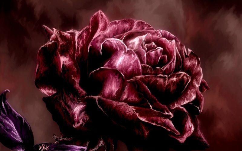 red rose petals art wallpaper