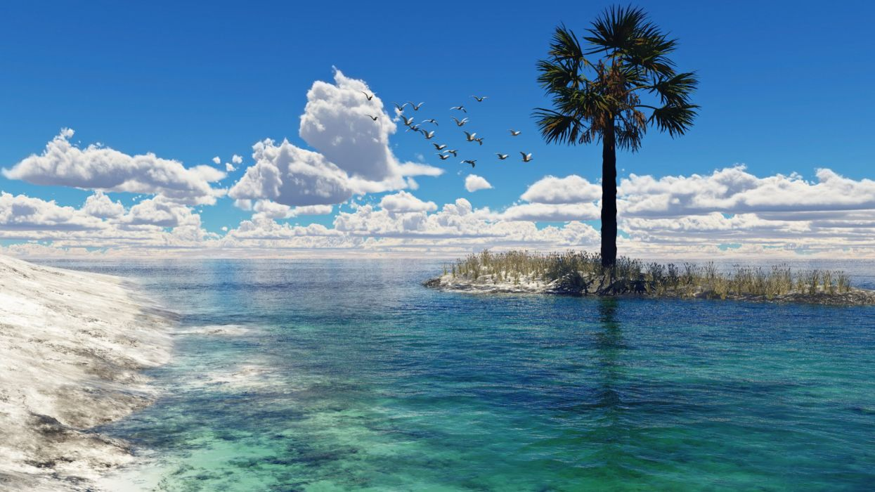 sea art hell escape artist seagulls palm clouds birds water wallpaper