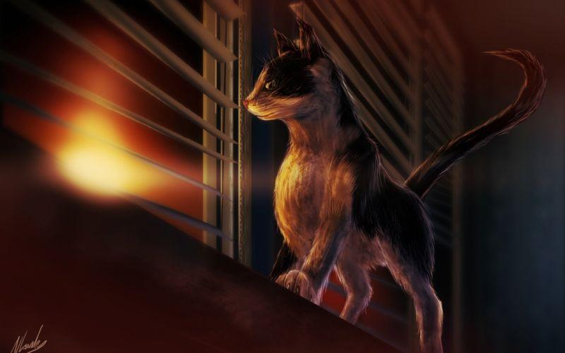 window sill interest cat blinds sunset art cat wallpaper