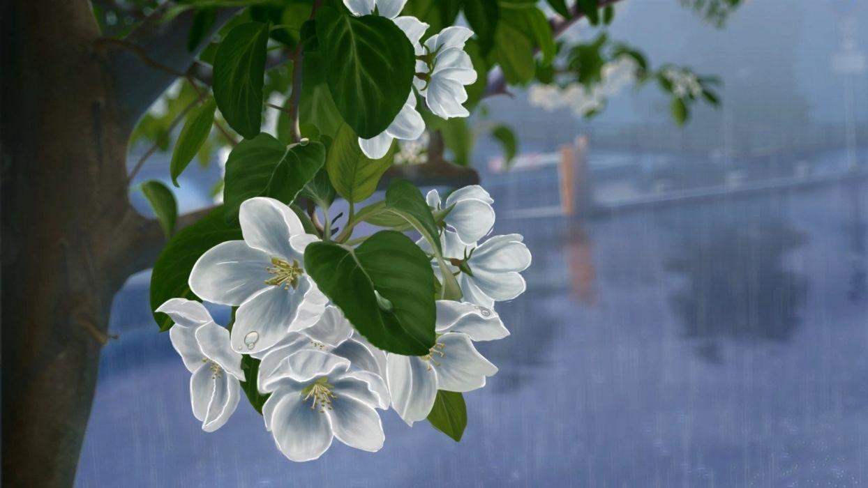 tree drops flowers art rain white apple drawing wallpaper