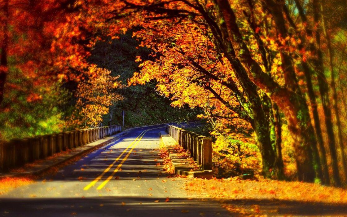 trees path leaves colors forest park nature bridge colorful autumn fall road walk wallpaper
