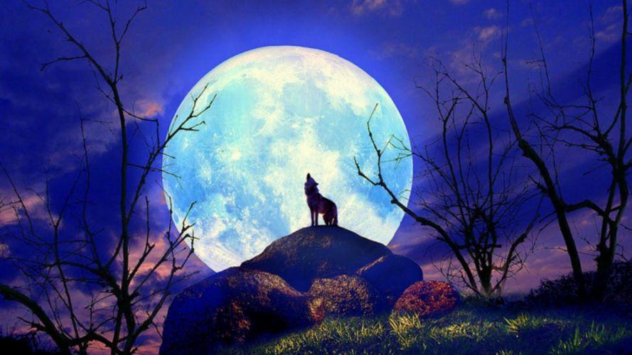 Wolf Nature Full Moon Yelp wallpaper