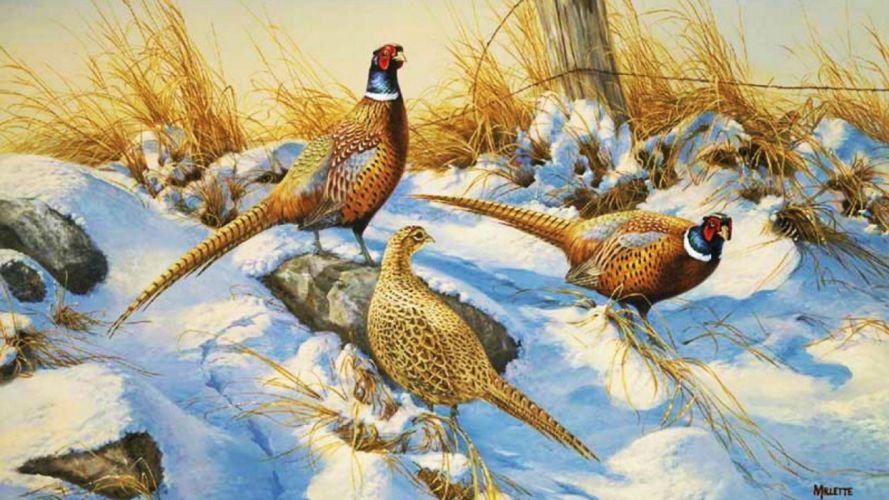 art oil painting drawing Snowy Pheasants Fence Grass wallpaper