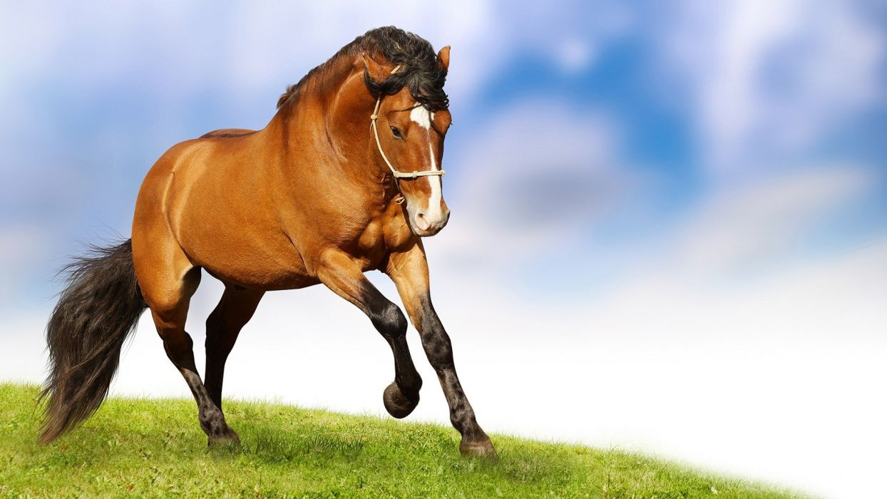 caballo carrera animal wallpaper