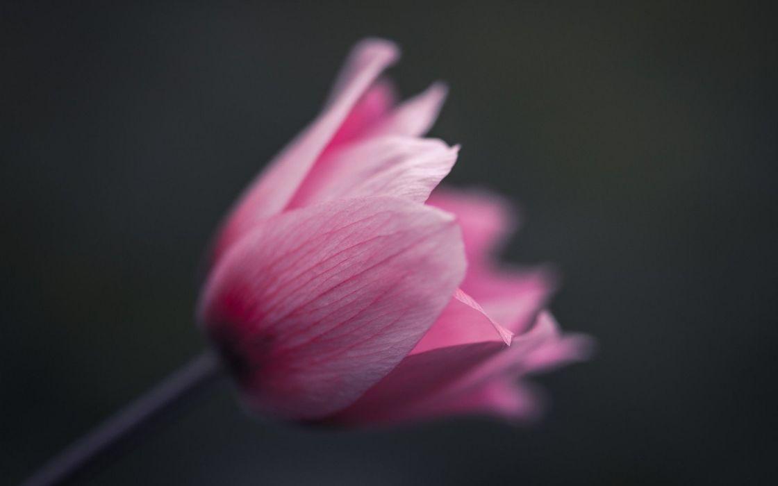 flower pink texture  wallpaper