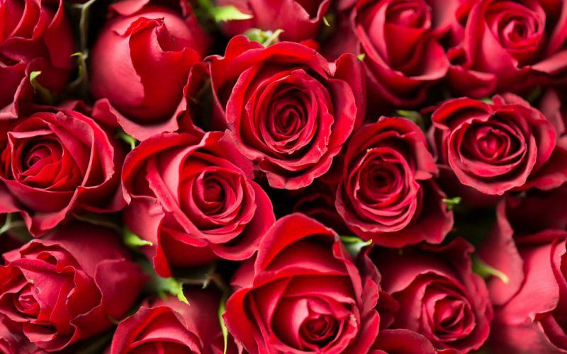 flower rose texture wallpaper