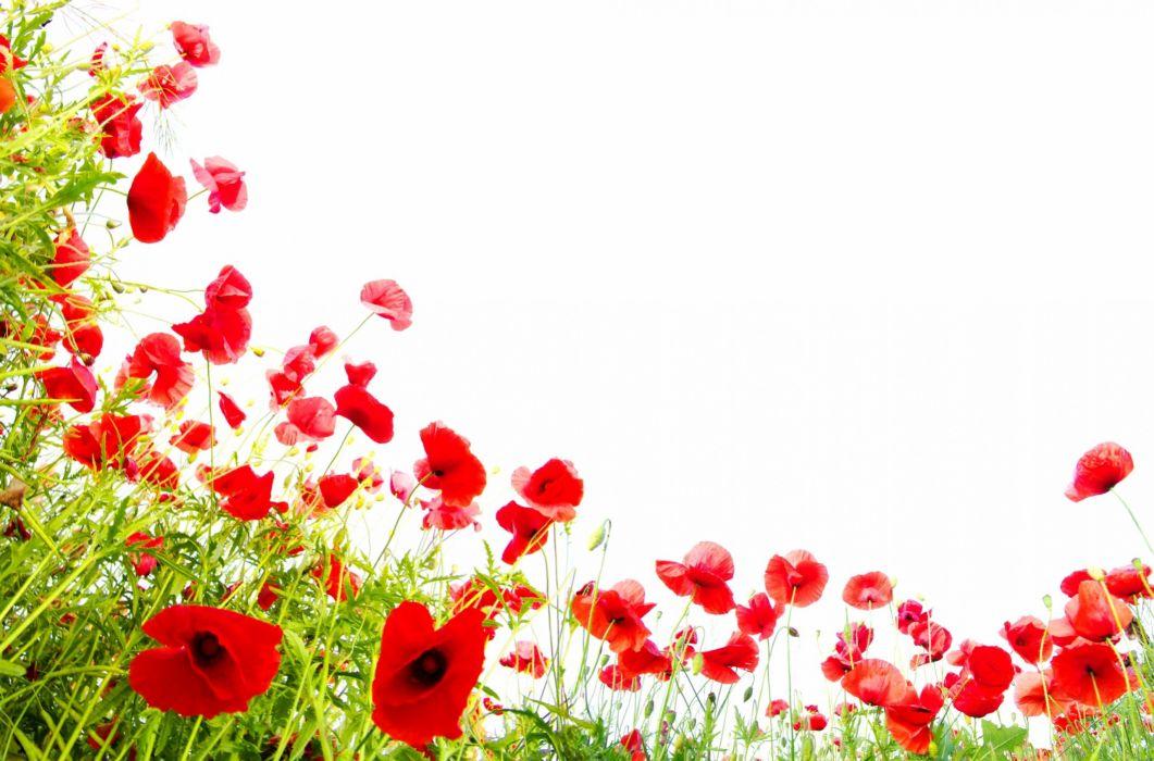 texture flower wallpaper
