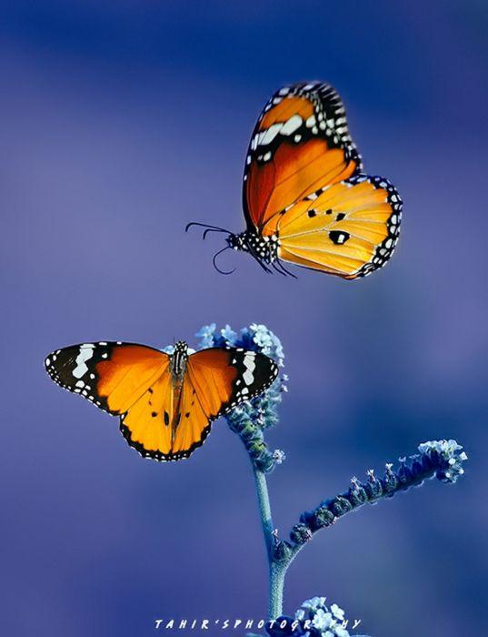 original photo animal beauty beautiful butterfly wallpaper