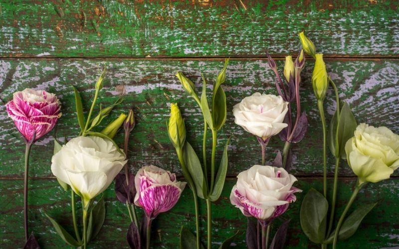Flowers texture wallpaper