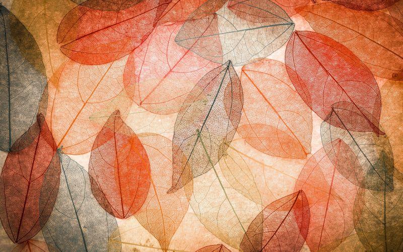 autumn texture leaf wallpaper