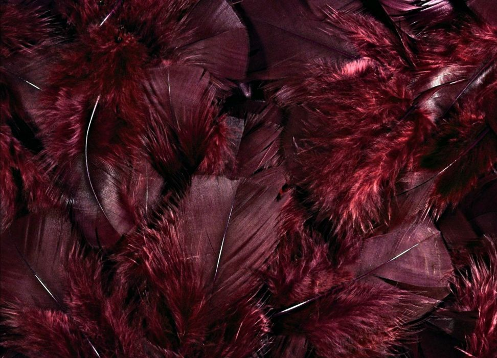 feather texture wallpaper