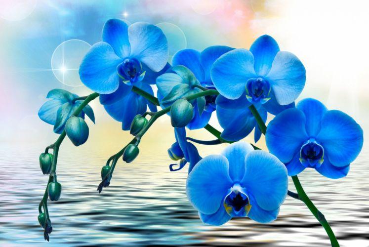 flower orchid card blue wallpaper
