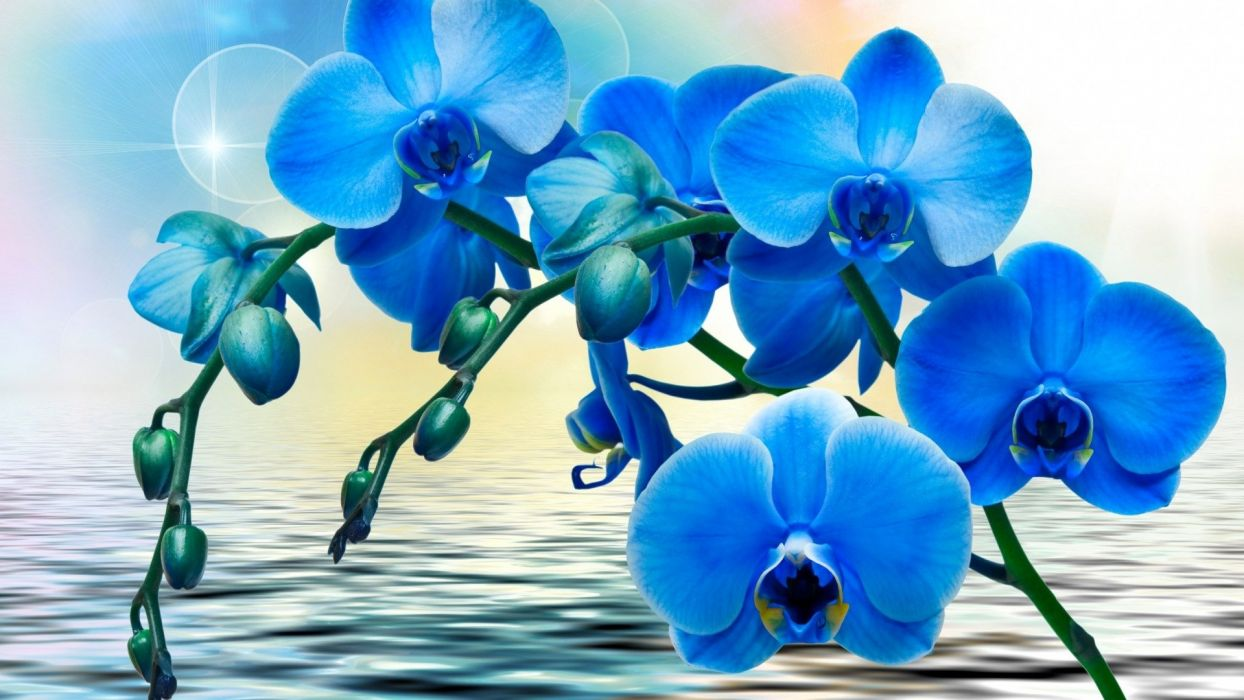 Textures Blue orchids wallpaper