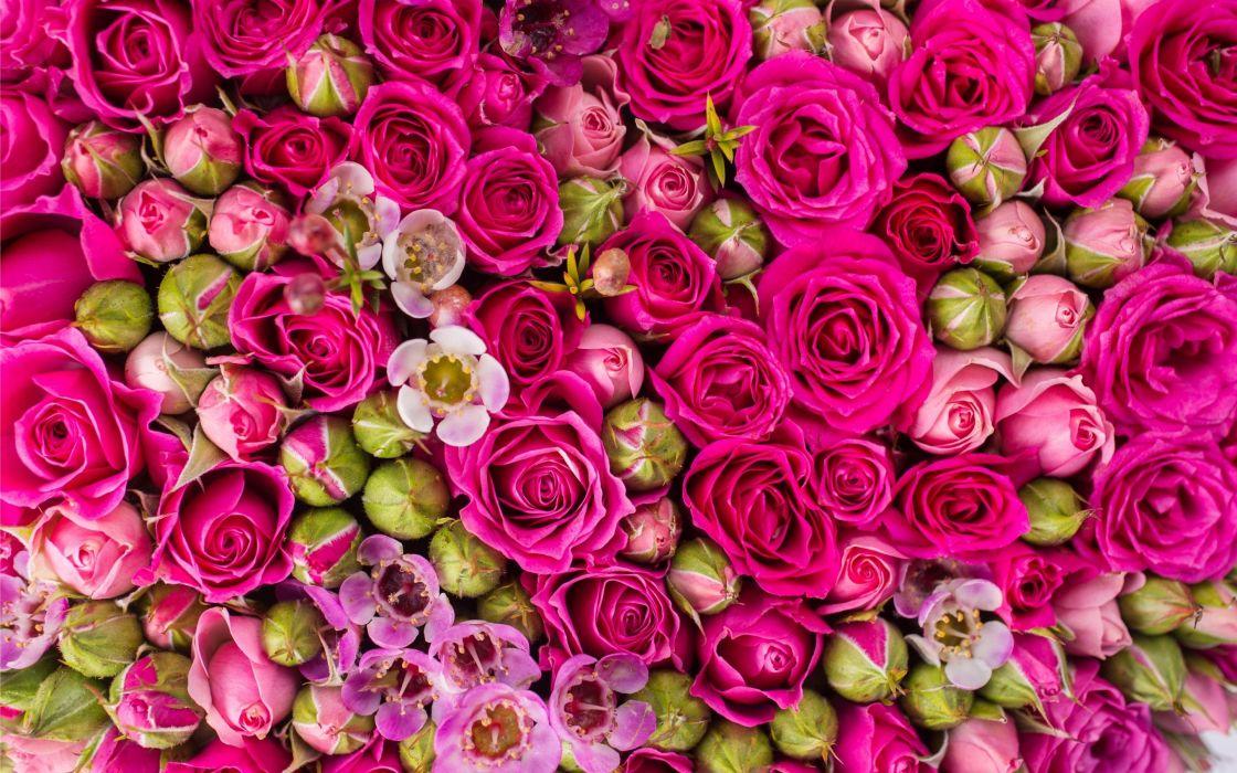 summer garden flower wallpaperfreehdfordesktop HD