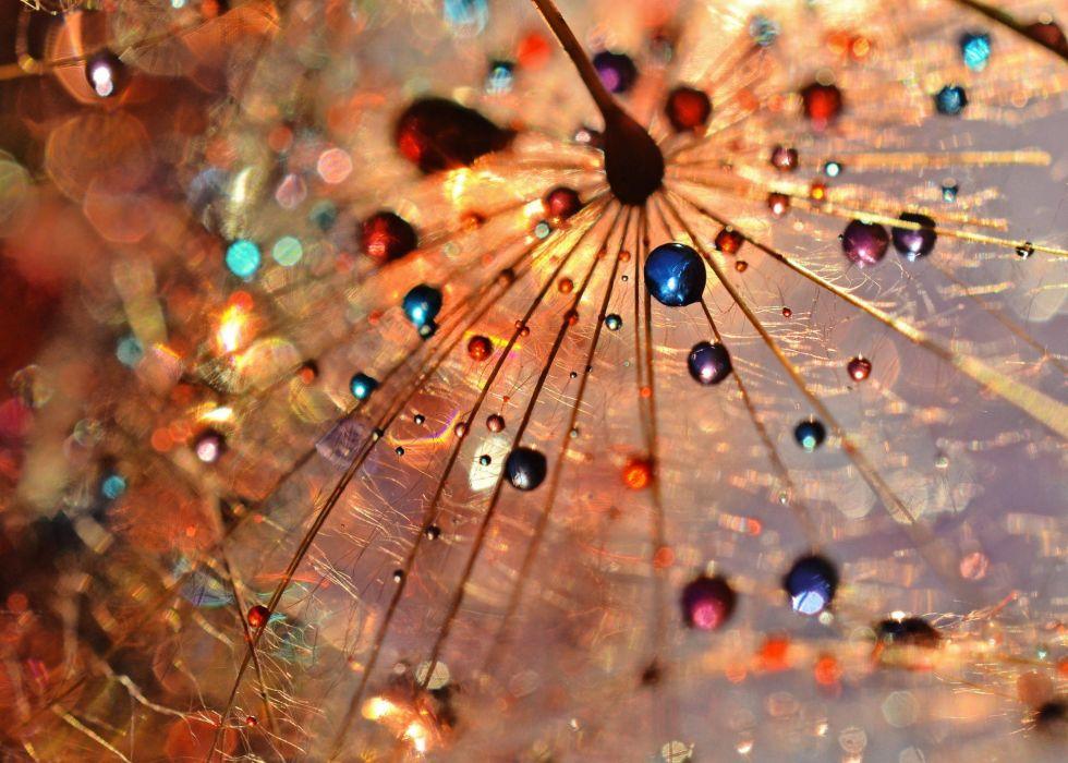Textures Precious dandelion wallpaper