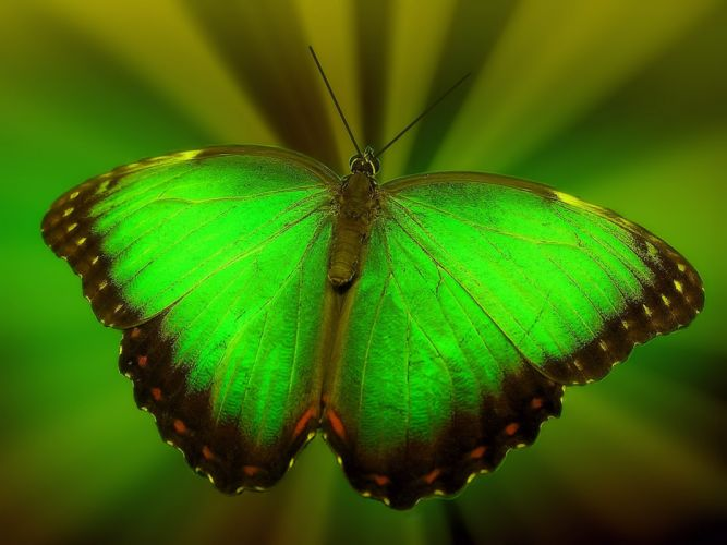 Textures Green Butterfly wallpaper