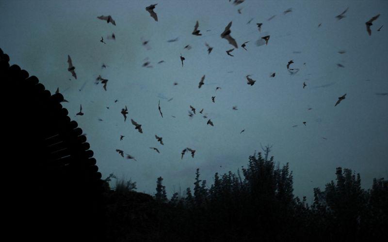 landscape bats silhouette wallpaper