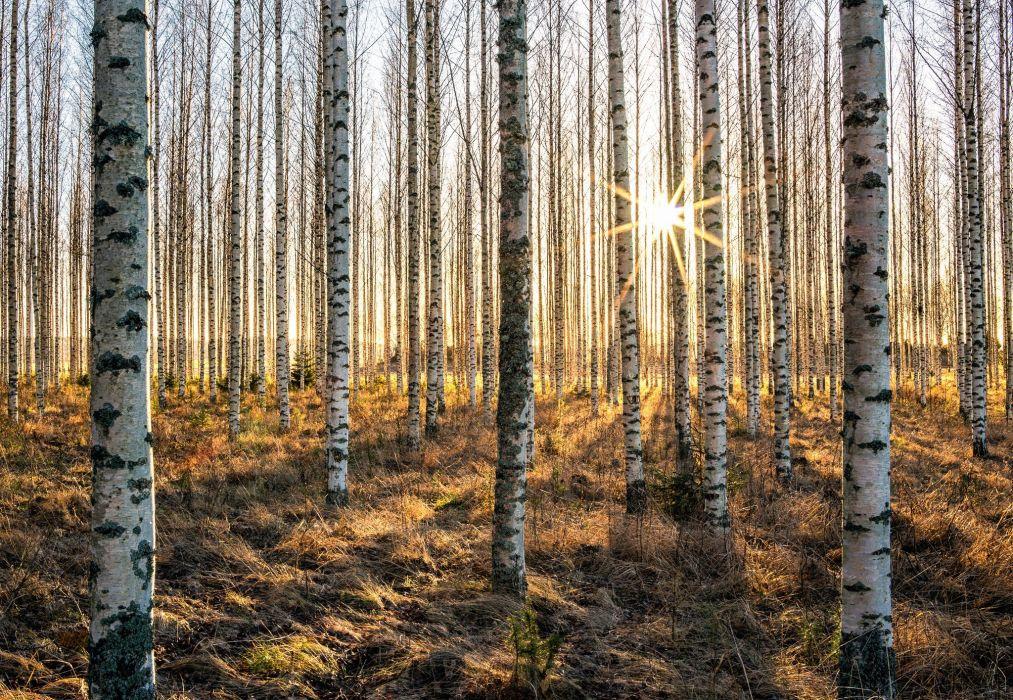 landscape trees forest wallpaper