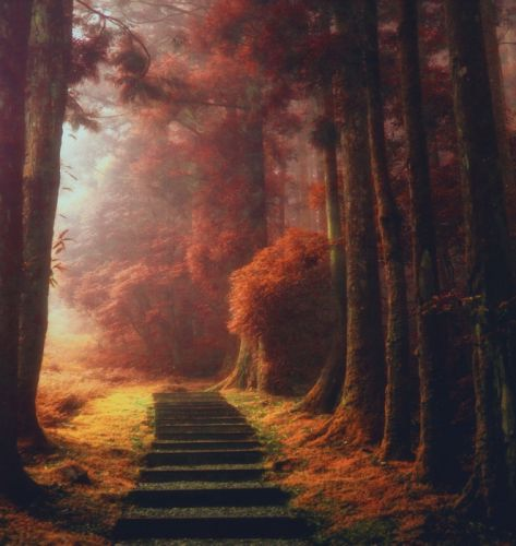 nature landscape magic path trees mist fall leaves stairs daylight wallpaper