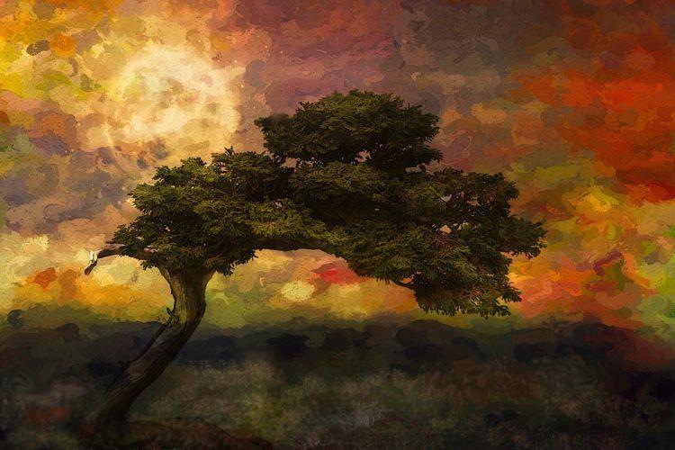 nature landscape trees artwork painting colorful wallpaper