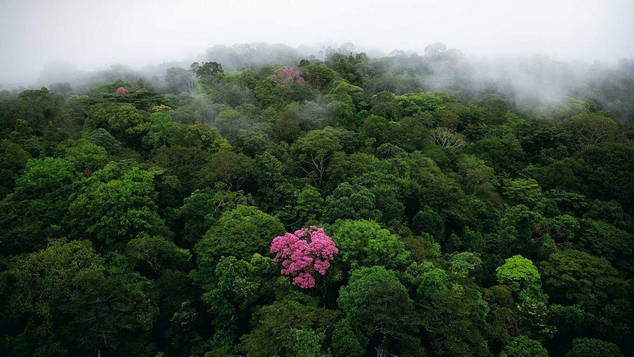 nature landscape trees forest mist bird's eye view jungle wallpaper