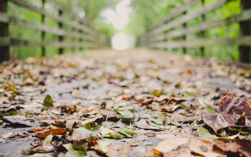 photography fall leaves depth of field wallpaper