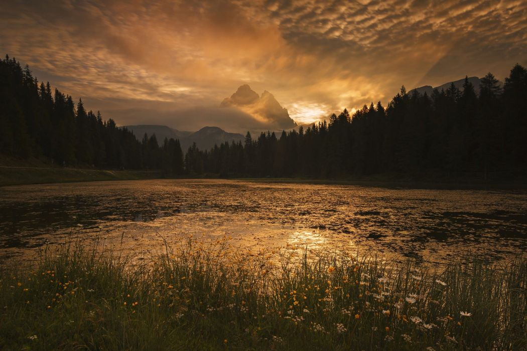 photography nature landscape morning sunlight sunrise wild flowers gold sky river mountains forest wallpaper
