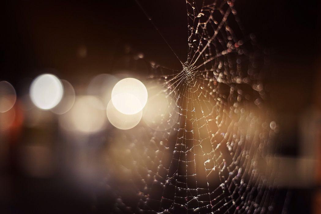 macro spiderwebs wallpaper