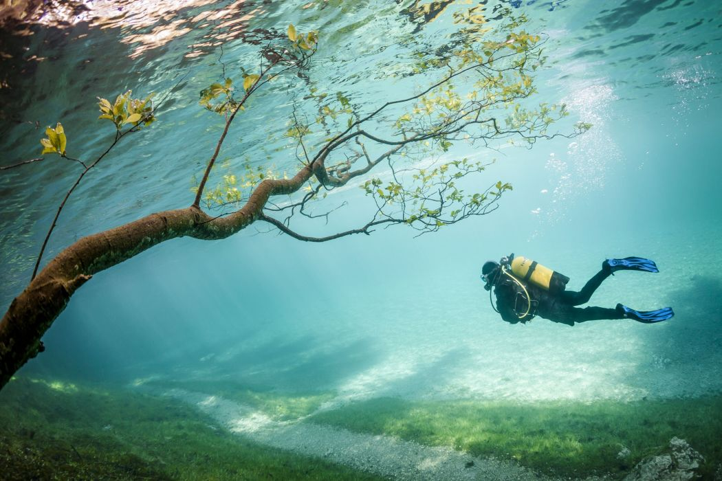underwater branch sea divers Gry wallpaper