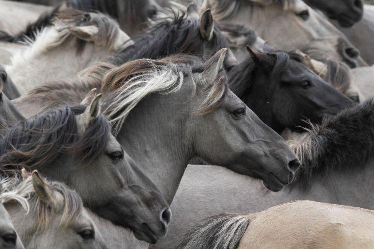 animals horse beautiful wallpaper