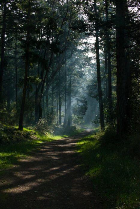 forest sunlight dappled sunlight sun rays shadow wallpaper