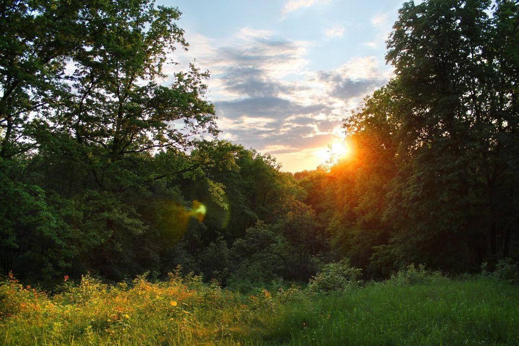 sunset forest sun rays sky clouds grass glade trees summer evening wallpaper