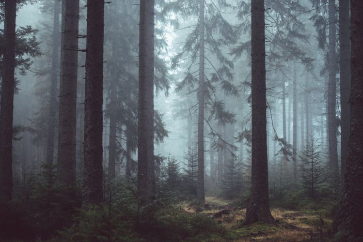 landscape nature trees road wate rmist wallpaper