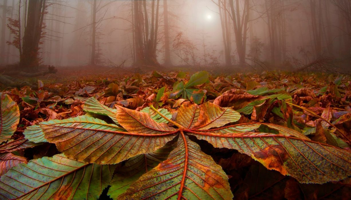 nature landscape forest leave strees mist sunlight fall wallpaper