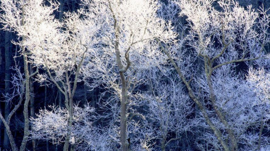 nature trees blue wallpaper